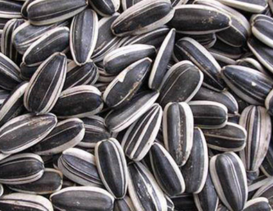Sunflower Seeds Color Sorting Video